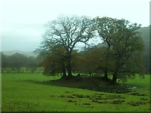NY3704 : Clump of trees in grassland north of Ambleside by Graham Robson