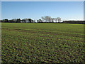 TL6354 : Big field and trees on the skyline by John Sutton