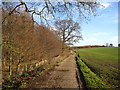 TM1876 : Track alongside Brakey Wood by Chris Holifield