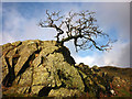 NY5700 : Hawthorn on outcrop, Eelman Sike by Karl and Ali