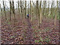 SP7515 : Walking on the Buckinghamshire Way towards Waddesdon by Michael Trolove