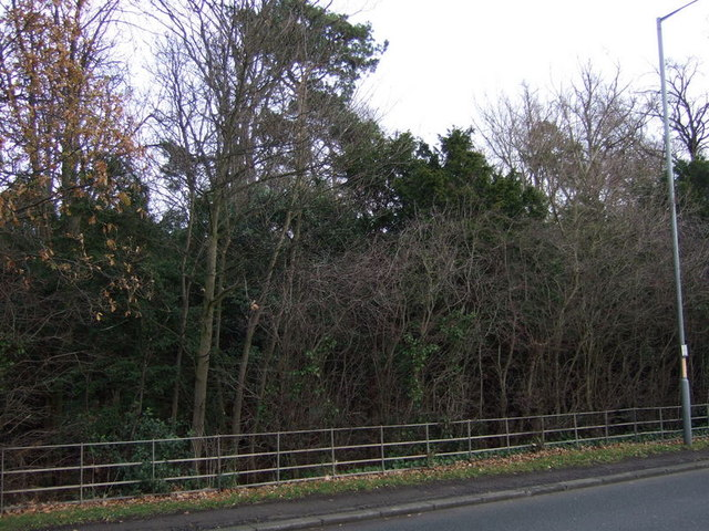 Woodland beside the A67