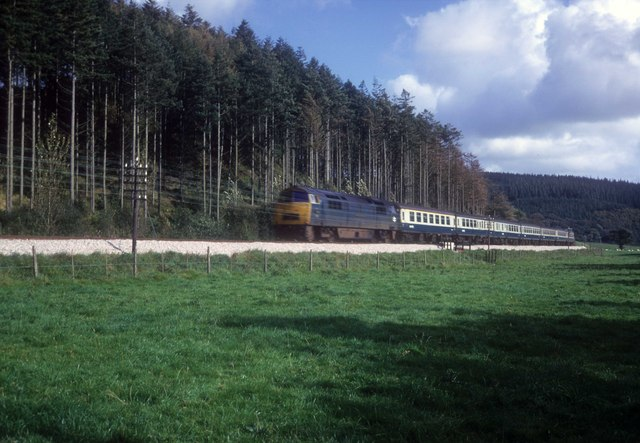 Paddington train passing Slip Wood late afternoon