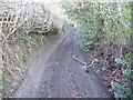 SO3380 : Bridleway above Clunton by Jeremy Bolwell
