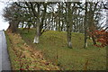 NY1935 : Woodland by Beckgrains Bridge and Sunderland Gill by Martin