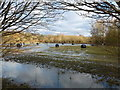 TL1498 : Hay on the flooded water meadow by Richard Humphrey