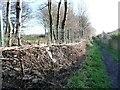 SE3322 : Strengthened boundary, west of Fieldhead Hospital by Christine Johnstone