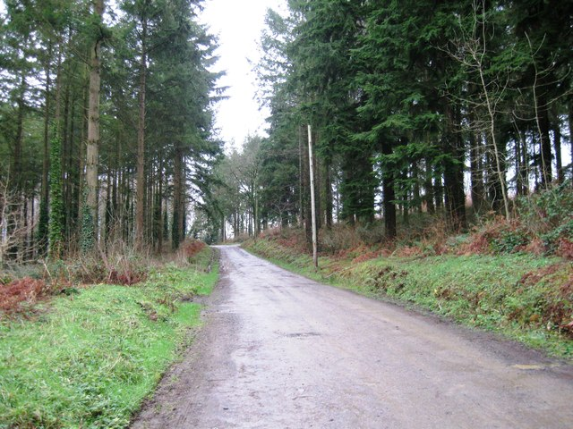 Bridle way, Flashdown Wood