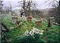 NT6231 : Mertoun old parish graveyard by Walter Baxter