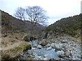 NN7221 : Tree above the waterfall, Allt an Tamhaisg by Alan O'Dowd