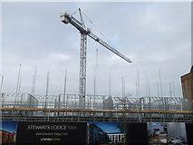 TQ2976 : Stewarts Lodge building site, Battersea by David Anstiss