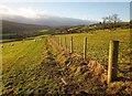 NZ8607 : Esk Valley Walk approaching Thistle Grove by Derek Harper