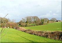 SZ4895 : Fields at Gurnard by Graham Horn