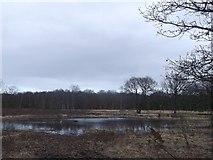 TQ2372 : Heath Pond, Putney Heath by David Anstiss