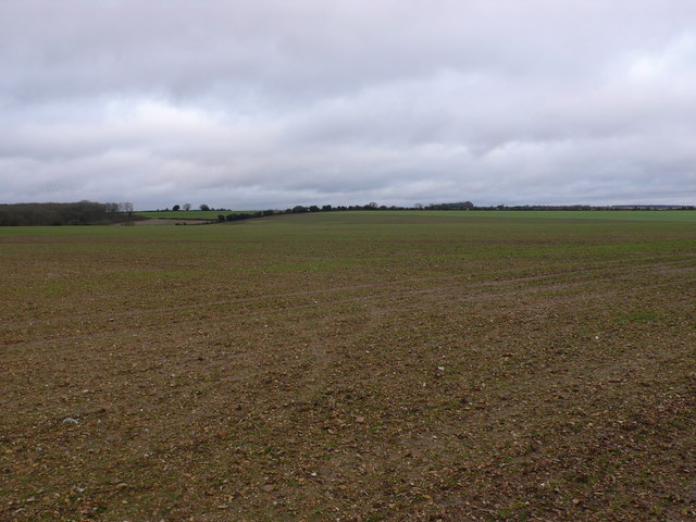 Fields on Bere Down