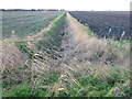 TL2988 : Dike between the fields by Richard Humphrey