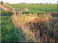 TL3089 : Small brick bridge on Mereside Drove by Richard Humphrey