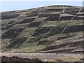 NT3141 : Patterned hillside on Black Knowe by Jim Barton
