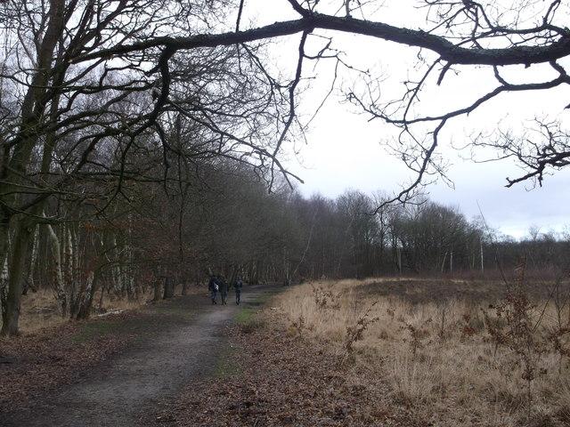 Path in Putney Heath