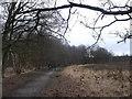 TQ2372 : Path in Putney Heath  by David Anstiss
