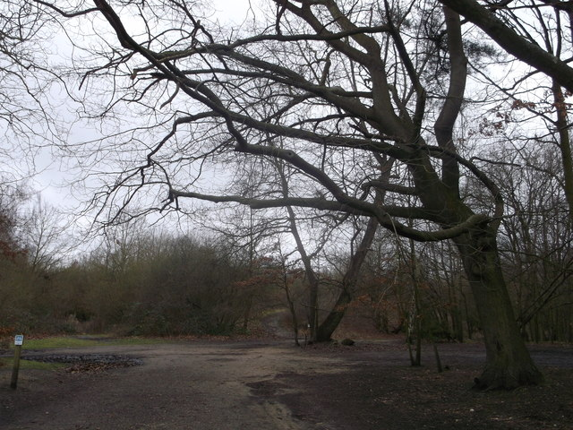 Inner Park Ride meets Windmill Ride, Putney Heath