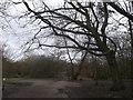 TQ2273 : Inner Park Ride meets Windmill Ride, Putney Heath by David Anstiss