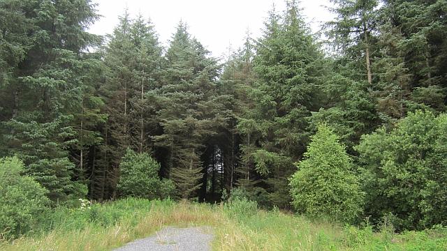 Woodland near Coole