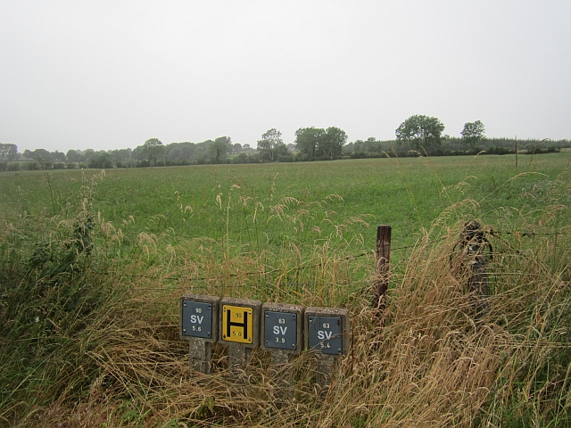 Grass crop