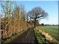SE3725 : Winter tree on Hungate Lane by Christine Johnstone