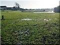 SE4233 : Waterlogged paddock, west of Sturton Grange Farm by Christine Johnstone