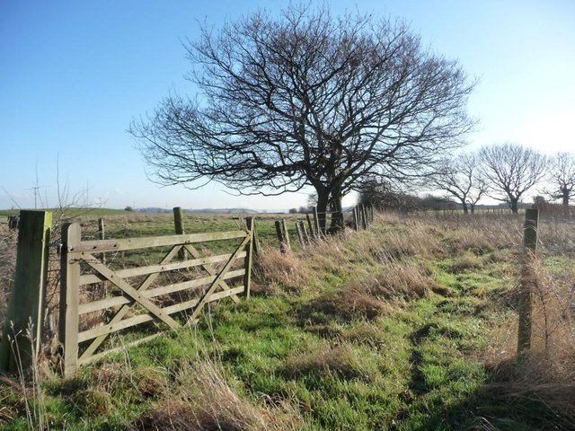 Winter trees on a field boundary