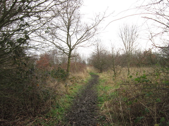 The Community Woodland on Noddle Hill Way, Hull