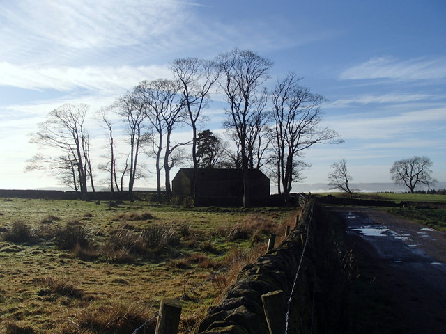 Field, barn and trees