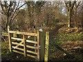 NZ8407 : Esk Valley Walk entering Hecks Wood by Derek Harper