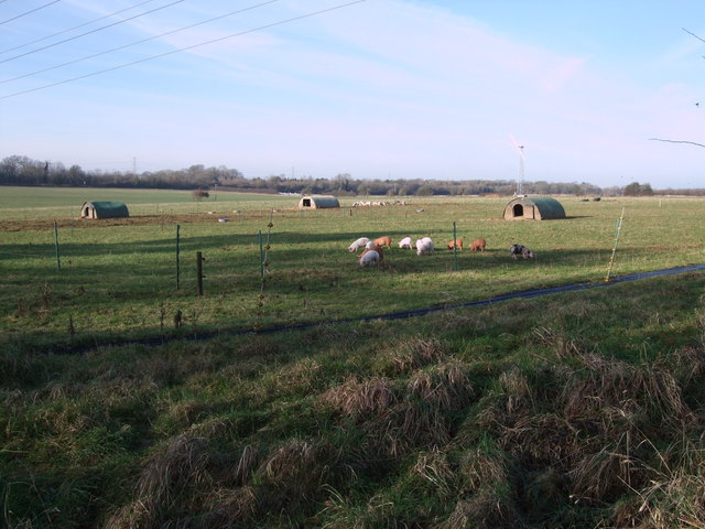 Piglets and windmills, Abbey Home Farm, Burford Road, Cirencester