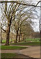 TQ2979 : Tree-lined avenue in Green Park by Oliver Dixon