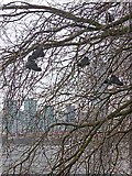 """TQ3078 : """"Shoe tree"""", Millbank by Oliver Dixon"""