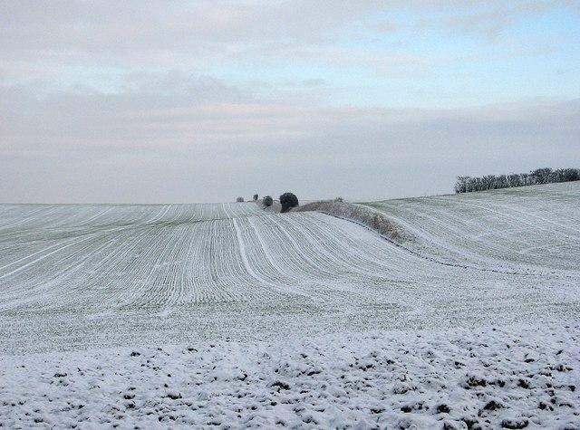 Wintry fields