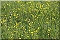 SP5202 : Wildflowers in the meadow by Steve Daniels