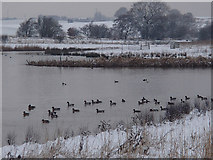 SK4569 : Meadow flash in winter by Andrew Hill