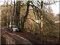 SX7878 : Yarner Wood NNR by Derek Harper