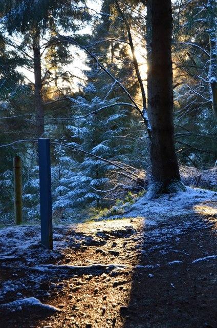 January sunlight, Glentress