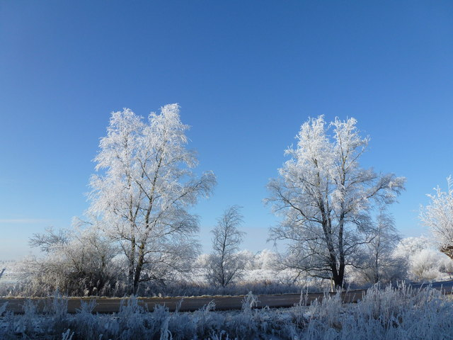 White trees on Wash Road - The Ouse Washes near Welney