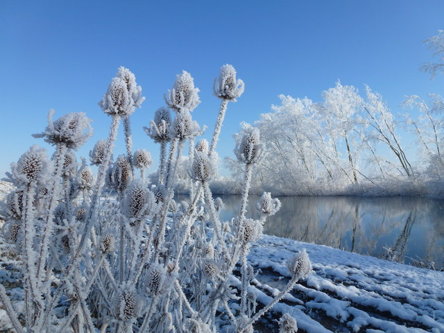 Hoar frost and The River Delph - The Ouse Washes near Welney