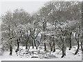 ST1073 : Wintry trees near St Nicholas by Gareth James