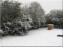TQ2780 : Snow covered foliage by Roger Jones