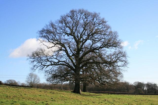 Field tree above Highbuilding