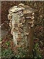 SX9063 : Fungi, Chestnut Avenue, Torquay by Derek Harper