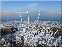 TL5392 : Winter washland - The Ouse Washes near Welney by Richard Humphrey