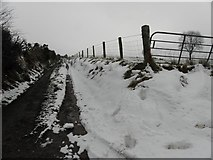 H5472 : A rough lane, Bracky by Kenneth  Allen